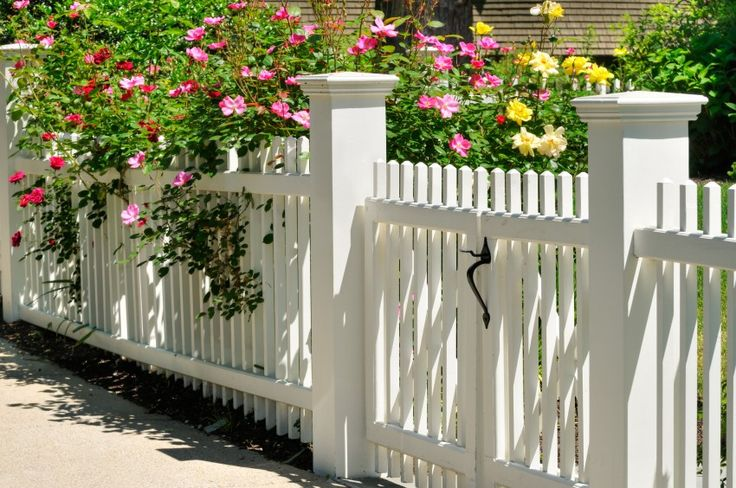 White Picket Fence Gate with Yellow, Pink and Red Roses