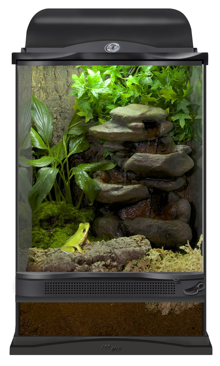 12x12x18 Zoo Med Terrarium setup for a tree frog. DIY this terrarium with a ReptiRapids LED Small Rock Waterfall, Cork Flats, Terrarium Moss, Eco Earth, and Natural Bush Plant Congo Ivy.