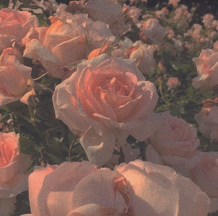 Pink Florals Flower Aesthetic Peach Aesthetic Aesthetic Wallpapers