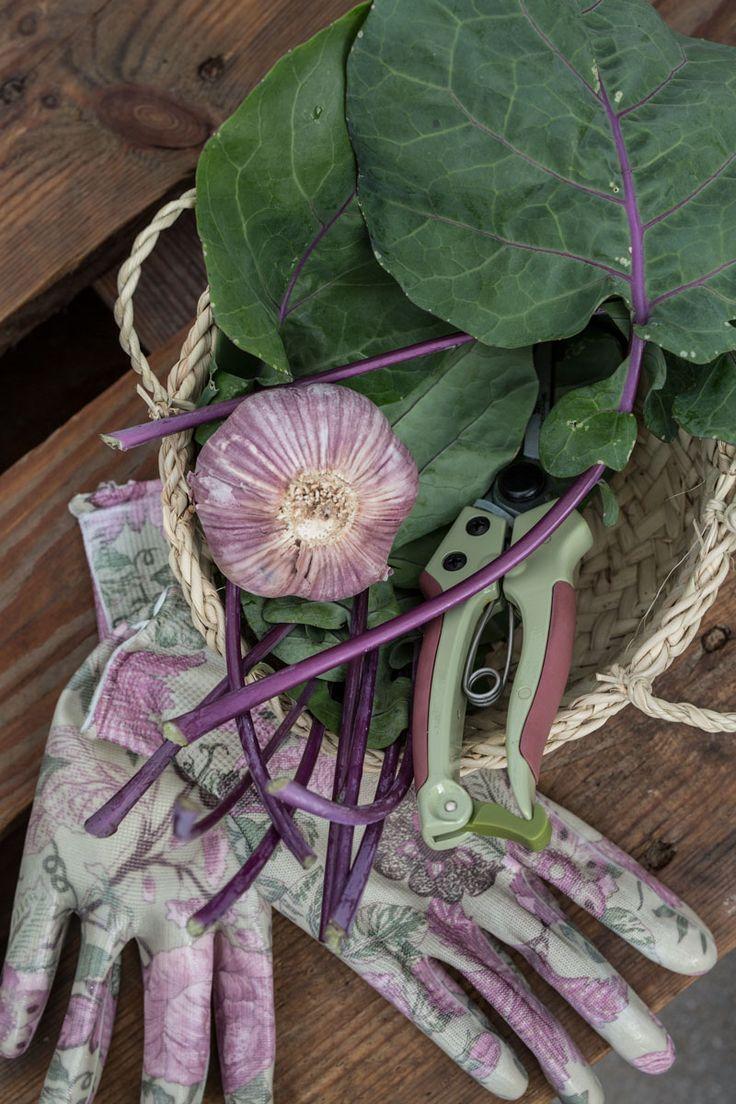 Würzig-leckerer Sommergenuss: Kohlrabi-Pesto aus Blättern