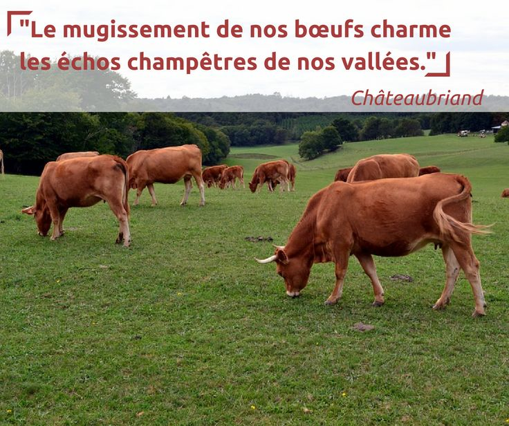Citation de Chateaubriand