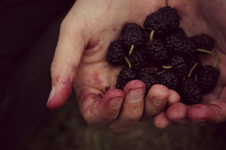 Mulberry (I love it, it reminds me childhood)