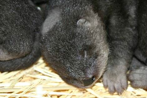 Two Boys and a Girl! It's River Otter Babies for Oakland Zoo