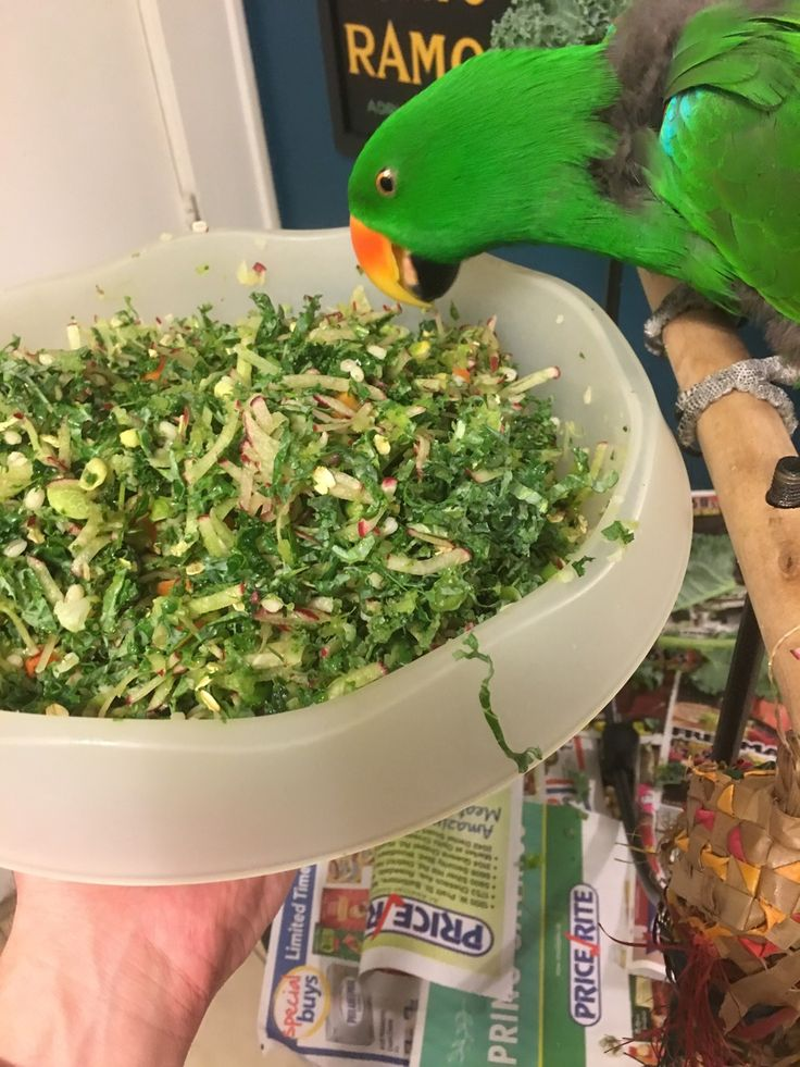 Stressing the food? Not anymore! Chop convert - Parrot Forum - Parrot Owner's Community