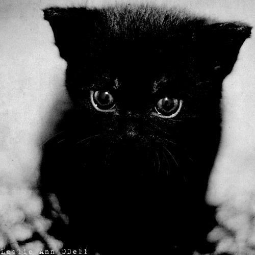 Black cat overload.