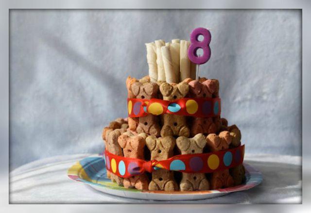 Как приготовить торт для собаки своими руками (с ...