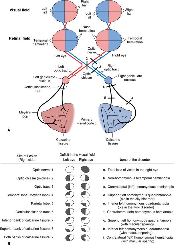 9 best Neurology images on Pinterest   Neuroscience, Neurology and ...