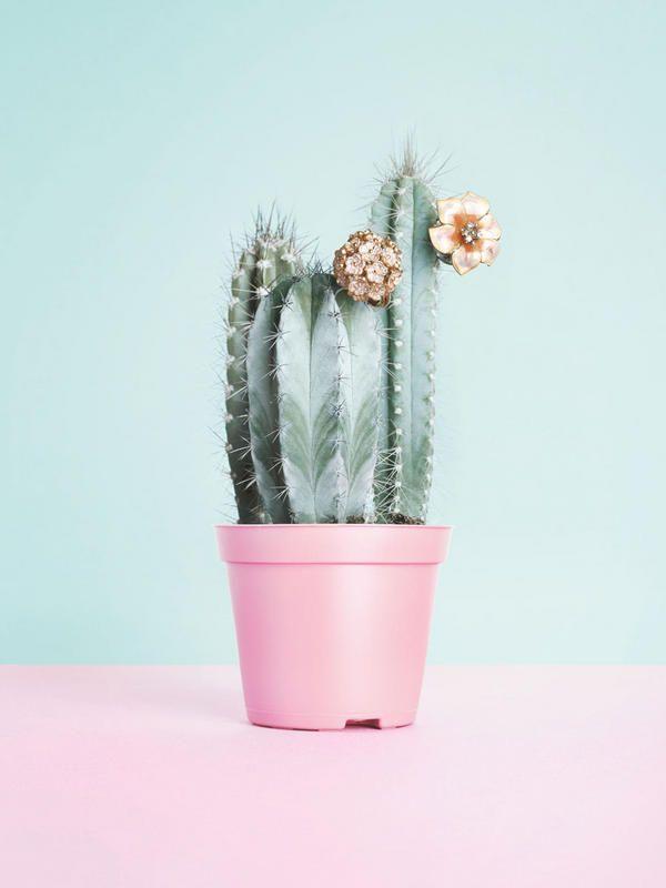 swett cactus