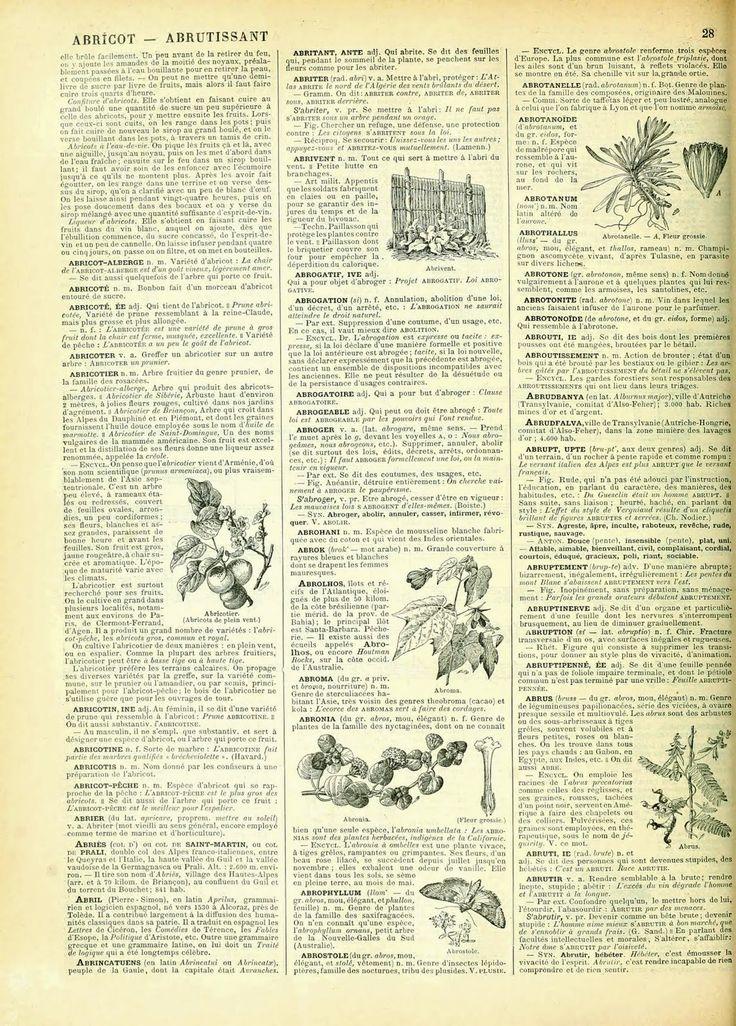 Vintage Ephemera: French Dictionary Page, 1898