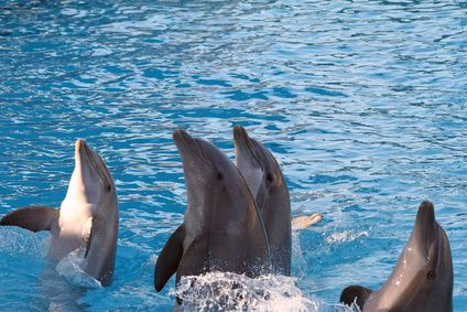 Swimming With Dolphins In Naples, Florida | LIVESTRONG.COM