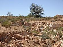 Erosion of a gully in South Australia caused by rabbits. Rabbits are also responsible for serious erosion problems, as they eat native plants, leaving the topsoil exposed and vulnerable to sheet, gully and wind erosion. The removal of this topsoil is devastating to the land, as it takes many hundreds of years to regenerate.