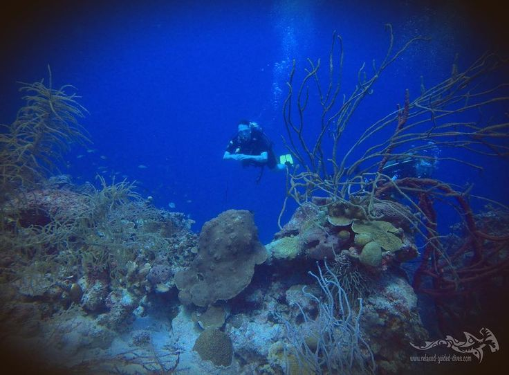 Great reef at Curacao.. #tauchen #diving #duiken #fun #curacao #relaxedguideddives #scuba #scubadiving #travel #explore #cressi #oceanreef #padi http://www.deepbluediving.org/nitrox-guide/