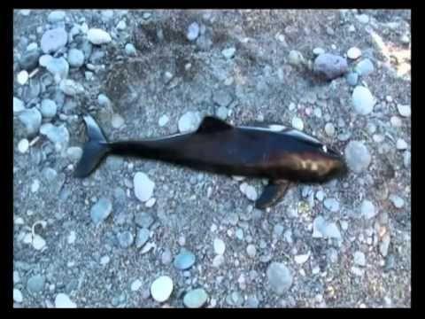Τα θαλάσσια θηλαστικά της Ελλάδας