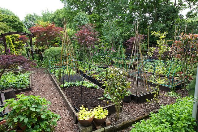 Work are at Four Seasons gardens. Veggie garden inspiration!