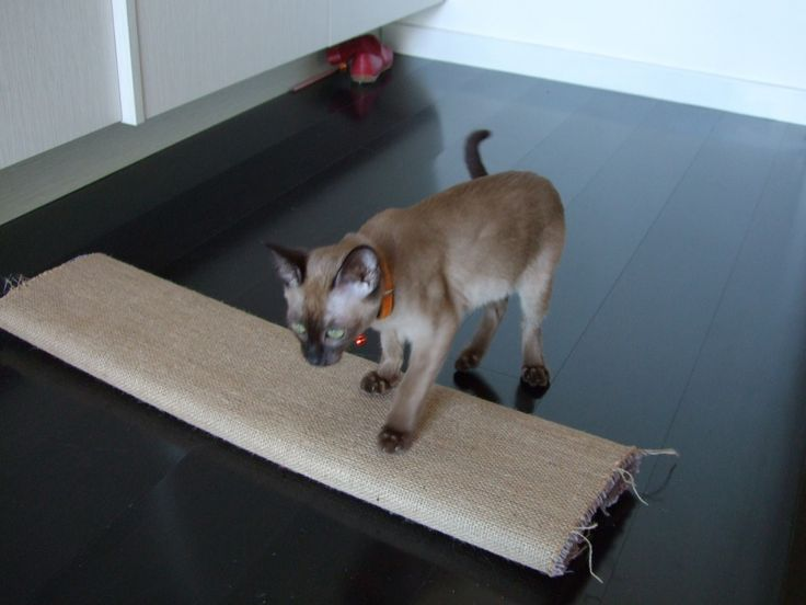 Make a cheap cat scratching post using a plank of wood, a piece of carpet and a staple gun. Easy!