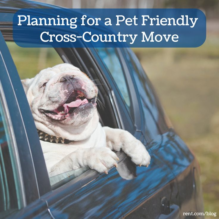 Moving across the country is complicated as it is, but those problems can easily double when you have pets making the move with you. Check out these tips for planning a pet-friendly cross country move.