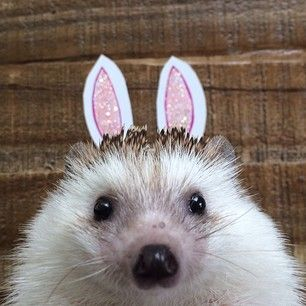 """""""I am not rabbit. I am hedgehog."""" 