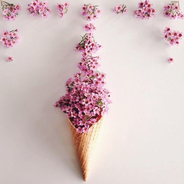 cones by kellysnapshappy - ✿Floralls✿