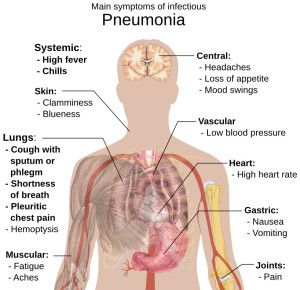 Senior Alert1 CDC now recommends two pneumonia vaccines: Prevar 13 and Pneumovax 23 are necessary for effective prevention.