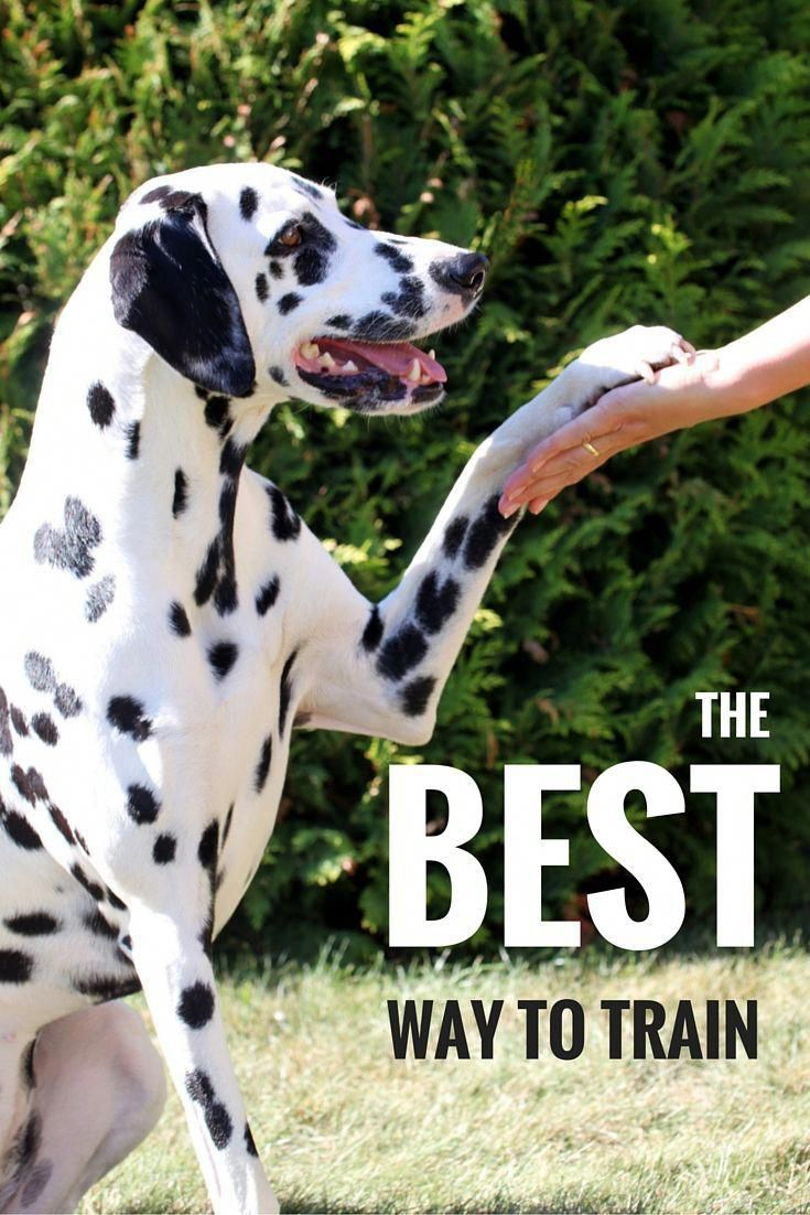 Best Dog Training Methods Choosing The Right Way To Train Your