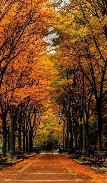 Fall in Boston, Massachusetts, USA | by Inder Wadhwa on 500px