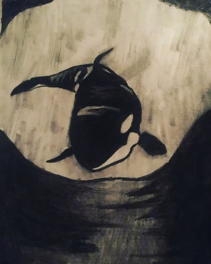 Orca whale Charcoal Drawing