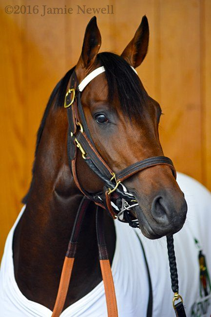 Exaggerator poses before 142 Kentucky Derby