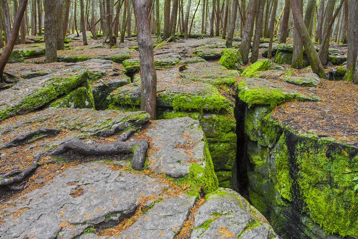 Locals in Warsaw, Ontario have been hiding one of their best-kept, and most magical, secrets from the world: A family of mossy, underground caverns that make up the Warsaw Caves.