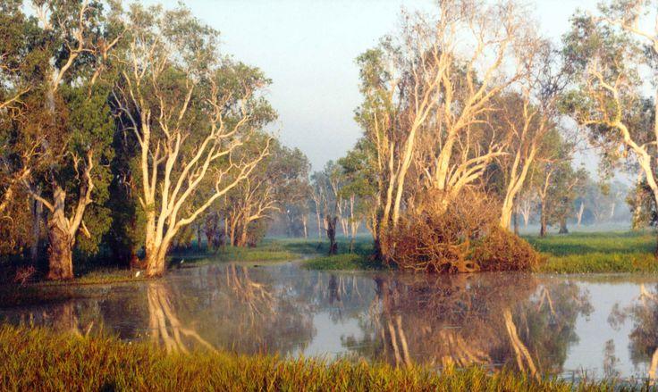 Yellow Water Kakadu  Northern Territory