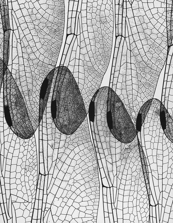 design-is-fine:  Andreas Feininger, Dragon fly wing (photogram), 1937 Dragonfly Wing (photogram), 1937