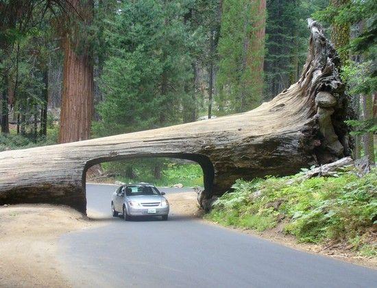 One Sequoia National Park Essay Hunter Elliott