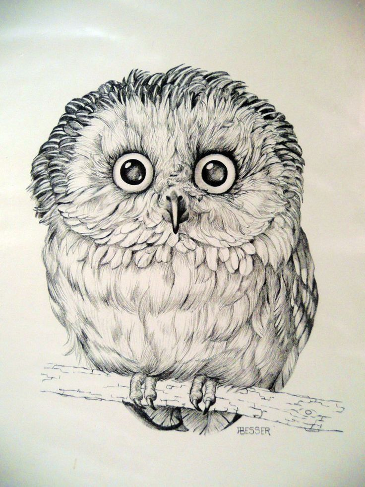 OWL art PRINT DRAWING by Besser printed for by angelinesattic