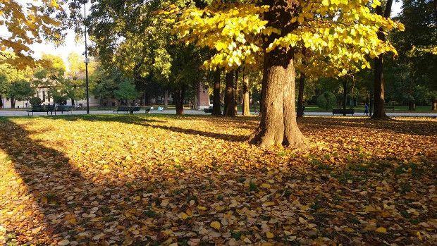 dove ammirare il foliage a Milano