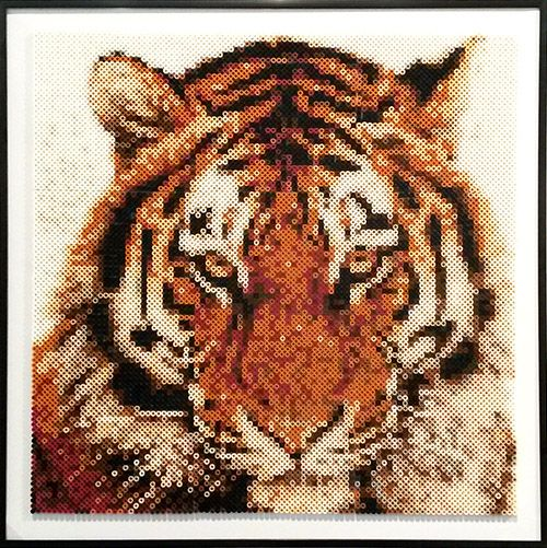 Tiger laves af fotoperler