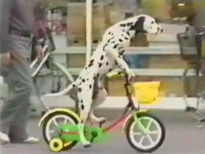 Dog On Bike Google Search Doodles Dogs Pinterest Riding