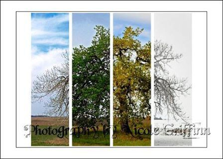4 in 1.  Photography by Nicole Griffin