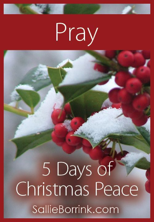 "Are you seeking more peace this Christmas? Consider the importance of prayer as part of the ""5 Days of Christmas Peace"" series."