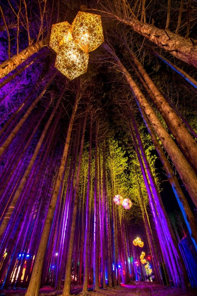 Electric forest June 23-26, 2016 :: Rothbury, Michigan