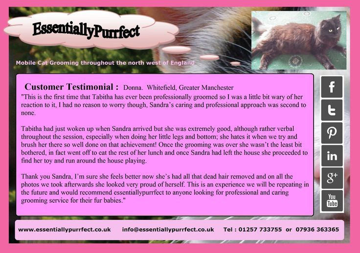 Customer Testimonial of EssentiallyPurrfect #mobile #catgrooming service.  Donna #Whitefield #Bury #Manchester