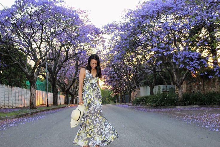globe_muncher Because Johannesburg is at its prettiest when purple is in full bloom!!! #jacaranda#jacarandainyourpocket#johannesburg