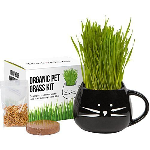 WHY PET GRASS AT ALL? Have you noticed your fur baby eating your plants lately? That is the surest sign that your animal will love this treat. Not to mention that some house plants are poisonous to our pets.  Instead you can give them a safe treat they crave. Cats and other creatures need... more details available at https://perfect-gifts.bestselleroutlets.com/gifts-for-pets/for-cats/product-review-for-holiday-gift-set-organic-cat-grass-growing-kit-with-organic-seed-mix-organ