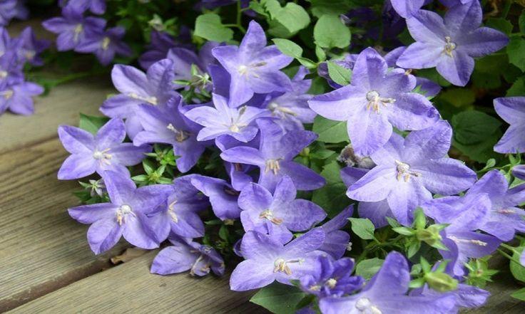 Modrá zahrada – uklidňující oáza pro vaše smysly
