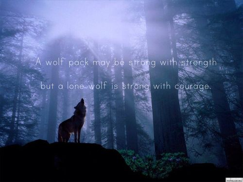 Wolf Quotes About Strength: 22 Best Images About Wolf, Quotes On Pinterest