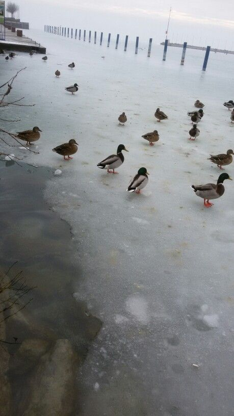 Winter at the Balaton Lake
