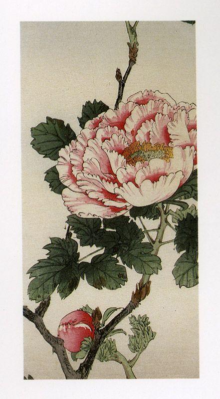 Google Image Result for http://horthistoria.com/wp-content/uploads/2008/02/japanese-chrysanthemum.jpg