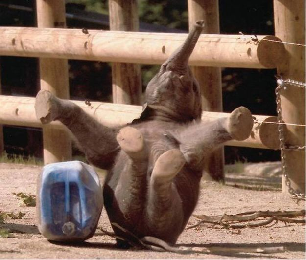 This Baby Elephant | The 25 Happiest Animals In The World