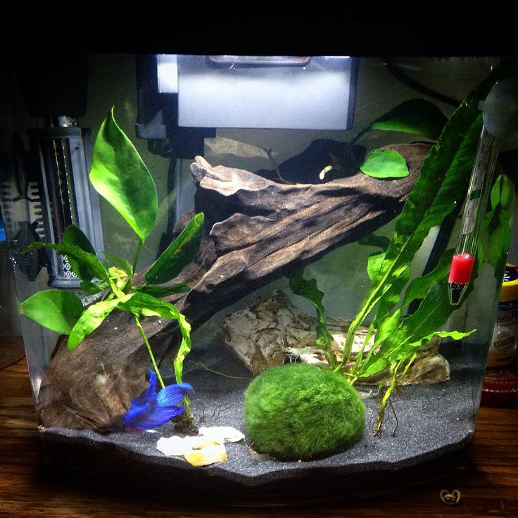11 best betta tank ideas images on pinterest aquarium for Betta fish tank size