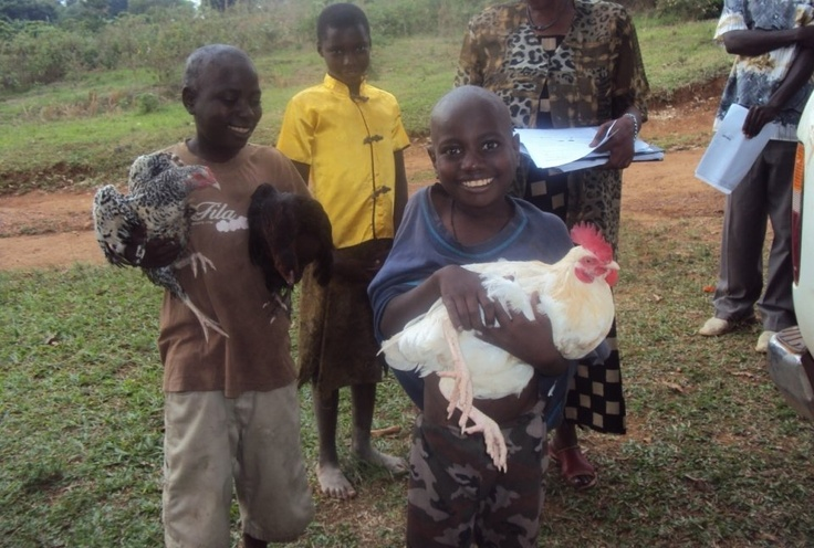 We sell eggs and chicks to pay for clothes, books and shool fees. Help us share our link with your network of friends: $10 will pay half the price of a hen or cock. - Chickens for 100 Orphans in Rural Buwunga