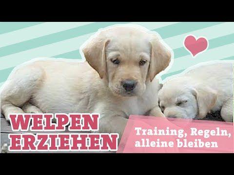 WELPENERZIEHUNG   Training, Erziehung, Regeln, Alleine lassen   Hunde Welpen erziehen   - YouTube