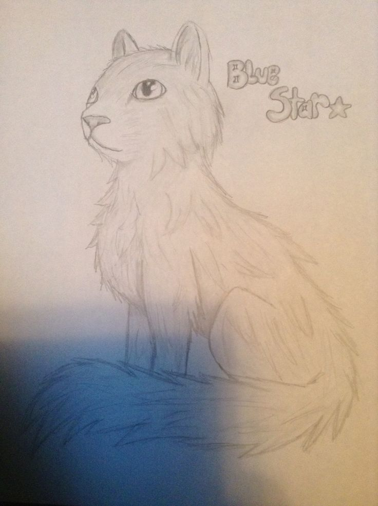 Drawing of blue star warrior cats, by Rebekah age 13
